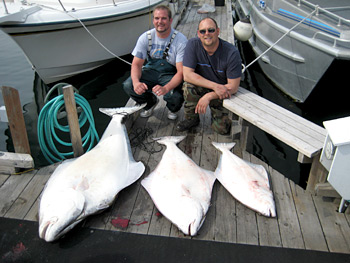 Three halibut lined up on the dock